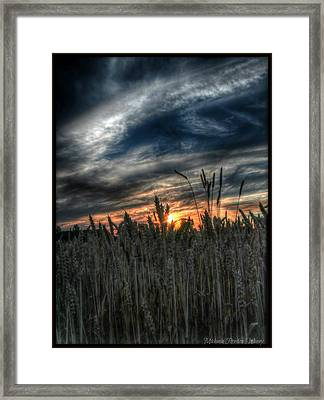 Into The Night Framed Print by Michaela Preston
