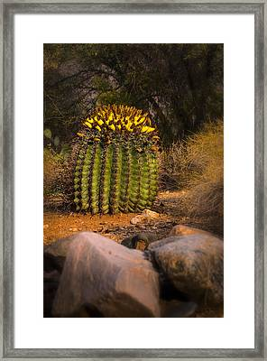 Framed Print featuring the photograph Into The Prickly Barrel by Mark Myhaver