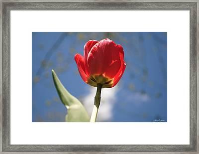 Into The Sun I Seek Framed Print
