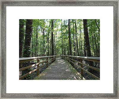 Into The Trees Framed Print by Kay Gilley