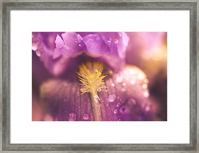 Into The Warmth Framed Print by Shane Holsclaw