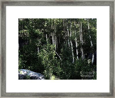 Into The Woods Framed Print by Bedros Awak