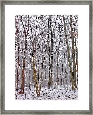 Into The Woods Framed Print by Bellesouth Studio