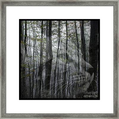 Into The Woods Framed Print by Elizabeth McTaggart