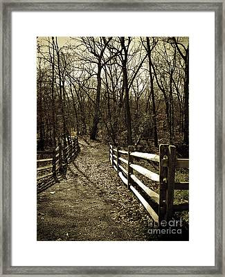 Into The Woods In Sepia Framed Print by Colleen Kammerer