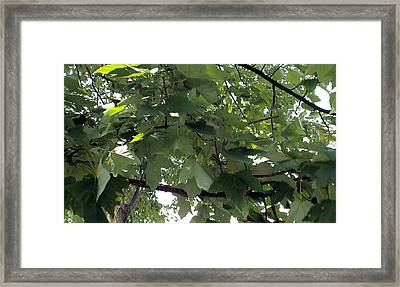 Into The Woods Framed Print by Paula Andrea Pyle
