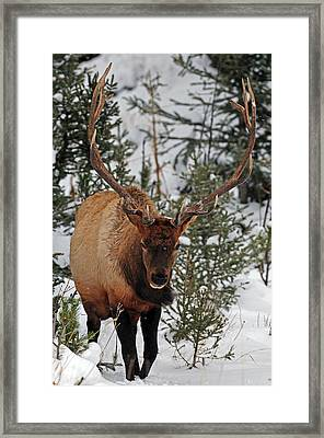 Into The Woods Framed Print by Sandy Sisti