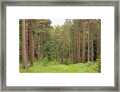 Into The Woods Framed Print by Tony Murtagh