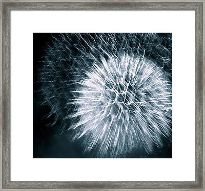 Framed Print featuring the photograph Intricate by Linda Mishler
