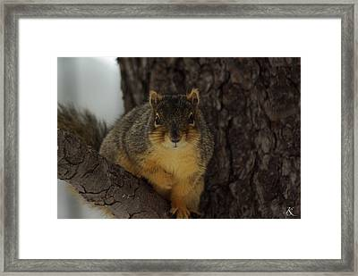 Intrigued Squirrel  Framed Print