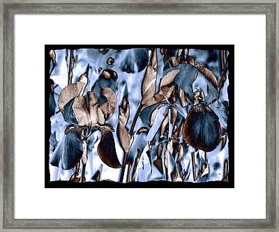Intriguing Irises Framed Print