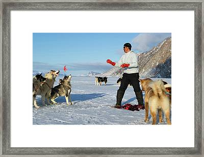 Inuit Hunter Feeding Walrus Meat To Dogs Framed Print by Louise Murray