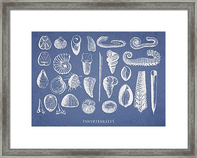 Invertebrates Framed Print by Aged Pixel