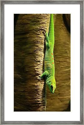 Inverted Gecko Framed Print by Jim Hughes