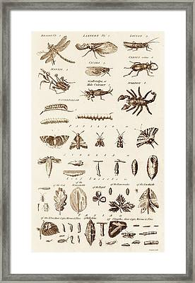 Invertibrates And Leaf Insects Framed Print by David Parker