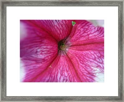Invigorate Framed Print by Mike Podhorzer