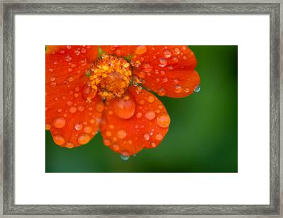 Invigorating Framed Print by Matt Dobson