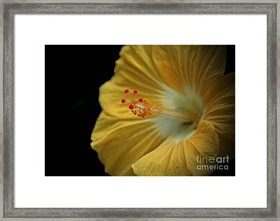 Invitation To Beauty Hibiscus Flower  Framed Print by Inspired Nature Photography Fine Art Photography