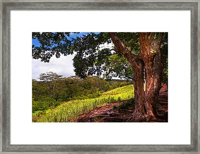 Invitation To Shadow Place. Chamarel. Mauritius Framed Print by Jenny Rainbow