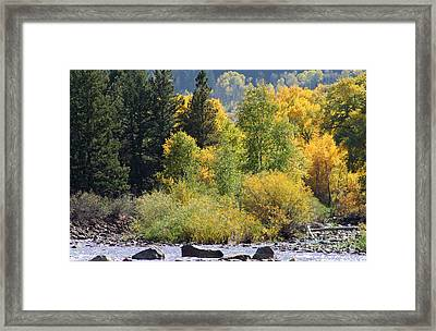 Inviting Trout Stream Framed Print