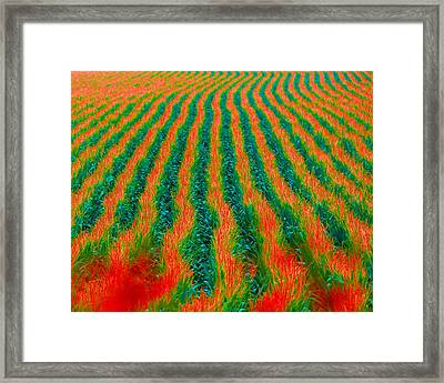 Iowa In August Framed Print by Angie Phillips aka Angieclementine