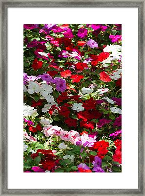 iPhone Case - Summer Carpet Framed Print