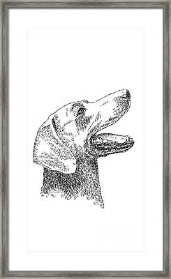 iPhone-Cover-Labrador Framed Print by Gordon Punt