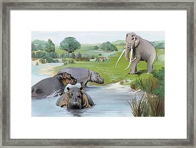 Ipswichian Interglacial Mammals Framed Print by Natural History Museum, London/science Photo Library