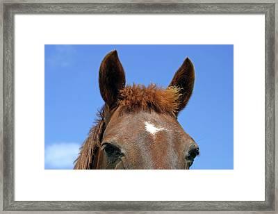 Ireland Close-up Of Horse Face Framed Print by Kymri Wilt