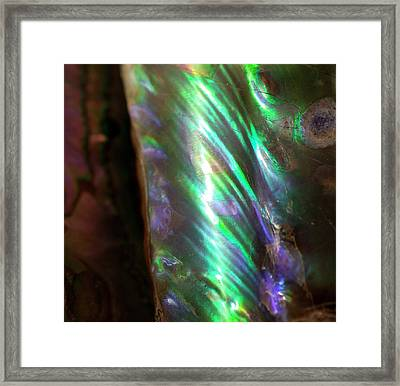 Iridescent Baculites Fossil Shell Usa Framed Print
