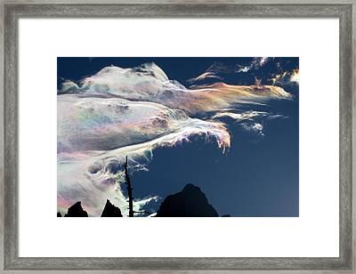 Iridescent Birds Framed Print by Amelia Racca