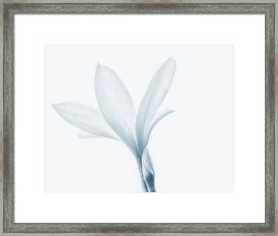 Iridescent  Framed Print by Camille Lopez