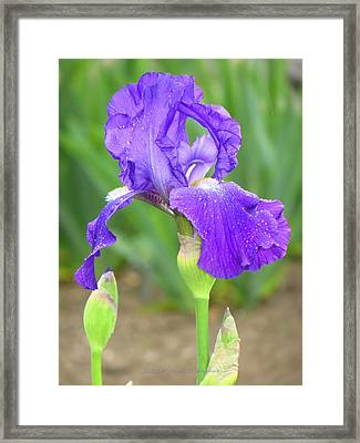 Iridescent Flower Framed Print by Sonali Gangane
