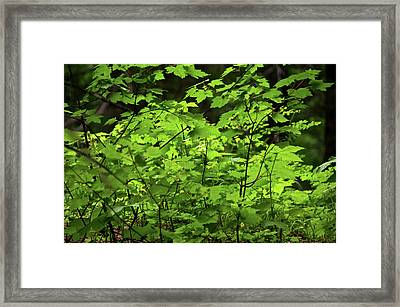 Framed Print featuring the photograph Iridescent Green by Trever Miller
