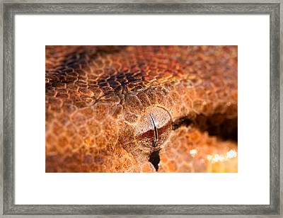 Iridescent Stare Framed Print by Jeff Sinon