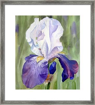Iris     Framed Print by Irina Sztukowski
