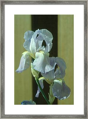 Iris 2 Framed Print by Andy Shomock
