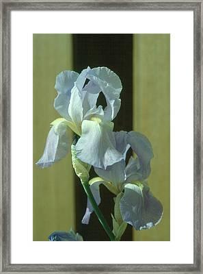 Iris 2 Framed Print