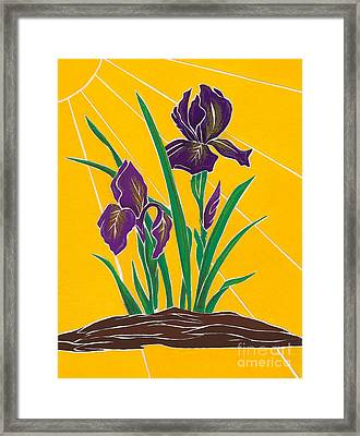 Iris 2 - In The Sun Framed Print
