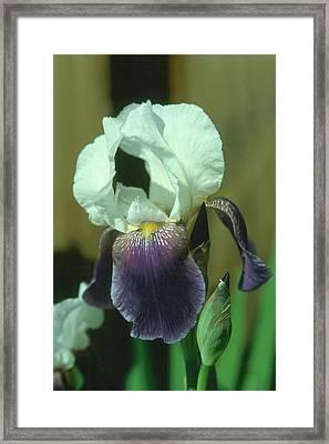 Iris 3 Framed Print
