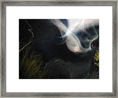 Iris 3 Framed Print by Brian George