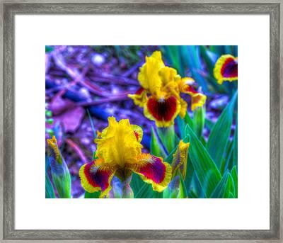 Iris #58 Framed Print by John Derby
