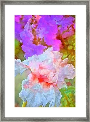 Iris 60 Framed Print by Pamela Cooper