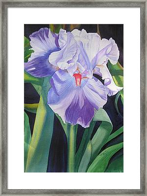 Iris A Bearded Beauty Framed Print