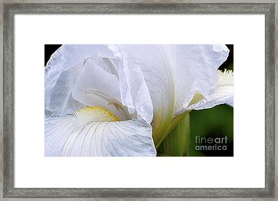 Iris Abstract Framed Print by Ron Roberts