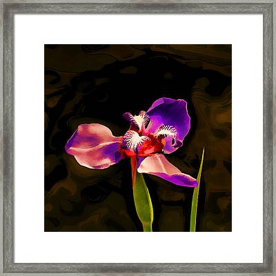Iris And The Glamour Shot Framed Print by Wendy J St Christopher
