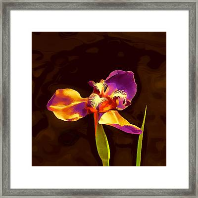 Iris And The Sunset Glamour Shot Framed Print by Wendy J St Christopher