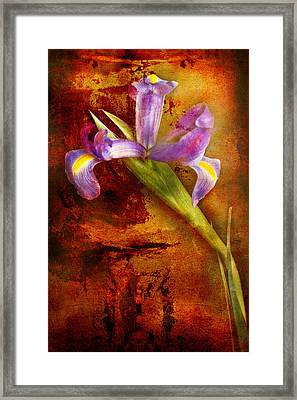 Framed Print featuring the photograph Iris Art by Bob Coates