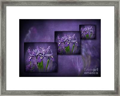 Iris Art Framed Print