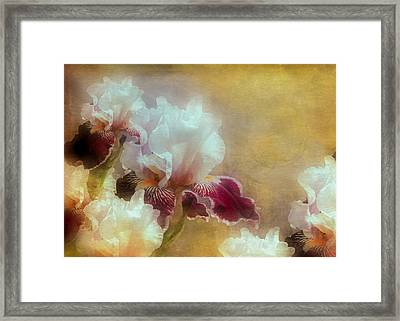 Iris At Hoods Canal Framed Print by Jeff Burgess